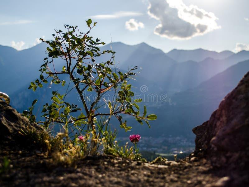 Sun rayonne la chute sur l'arbre de la vie images stock