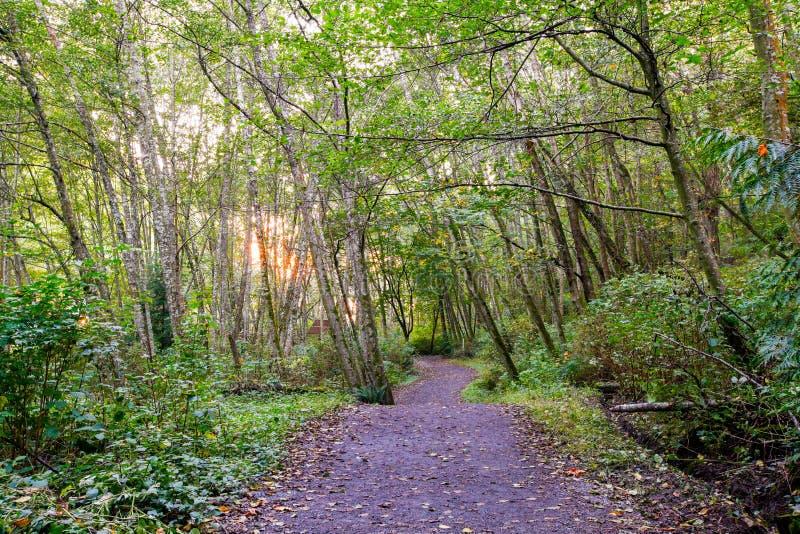 Sun rayonne le filtre par la voûte de forêt sur le sentier de randonnée images stock
