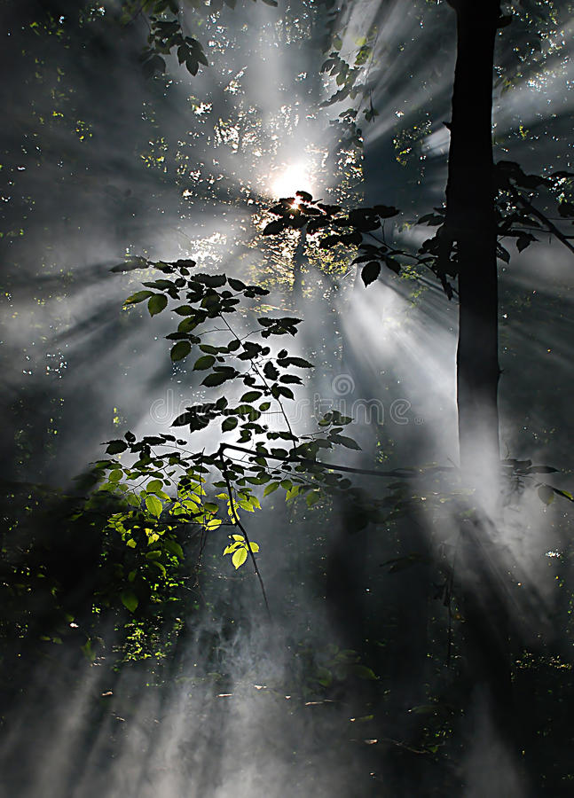 Sun Rays Royalty Free Stock Photo
