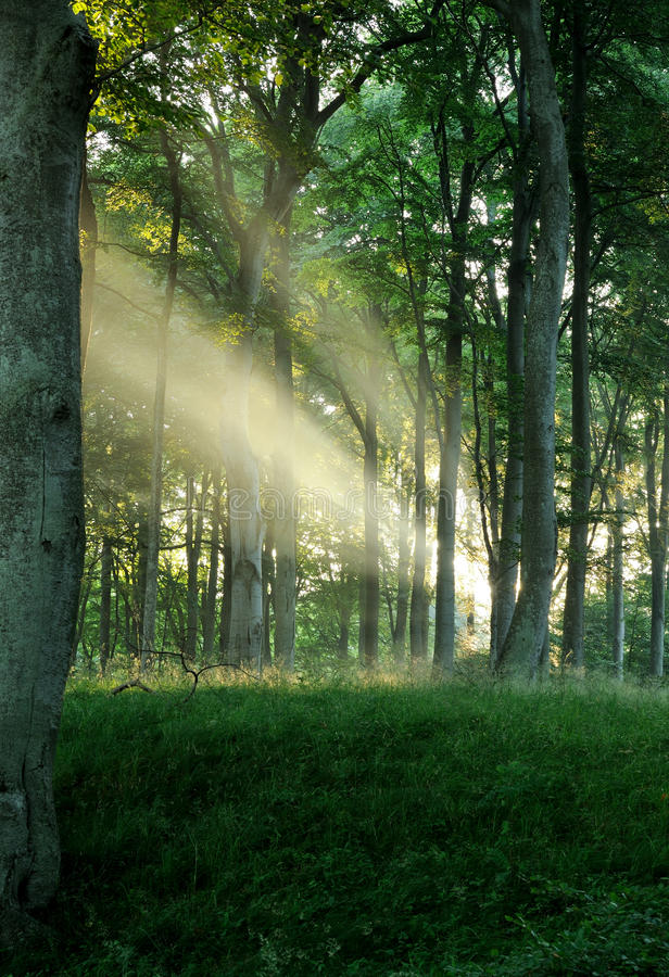 Download Sun rays stock image. Image of early, radiance, beginning - 20120005