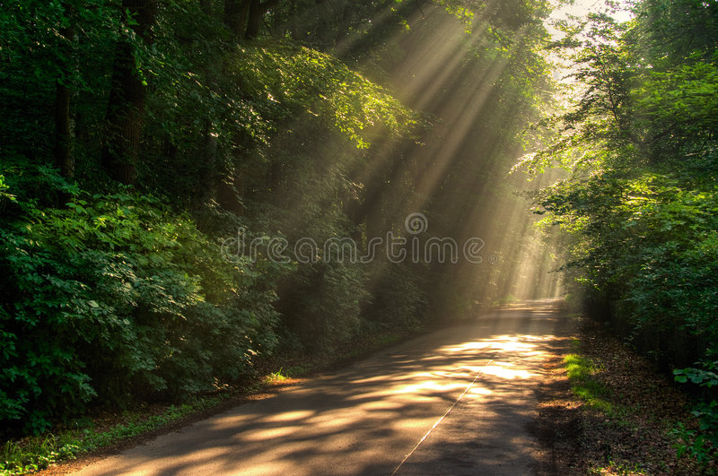 Download Sun rays stock photo. Image of light, path, plants, autumn - 5577564