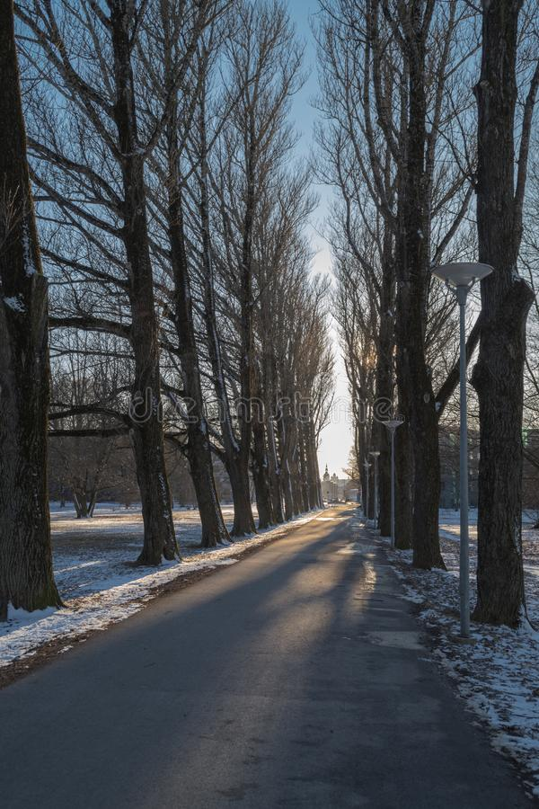 Alley of poplars in winter royalty free stock photos
