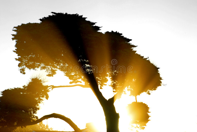 Sun Rays Beaming Through a Tre royalty free stock photos