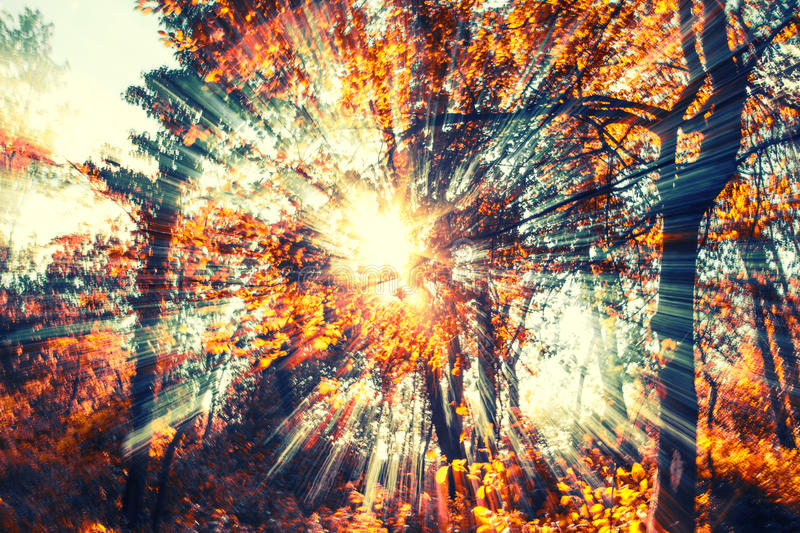 Download Sun rays in color stock photo. Image of summer, forest - 33692170