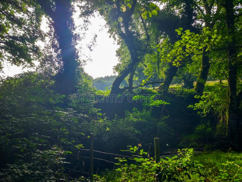 Sun rays crossing through branches of trees around green vegetation royalty free stock photo