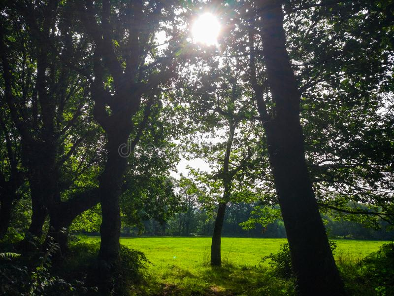 Sun rays crossing through branches of trees over a green grass f. Ield stock images