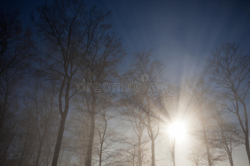 Sun rays crossing misty forest. In winter stock photography