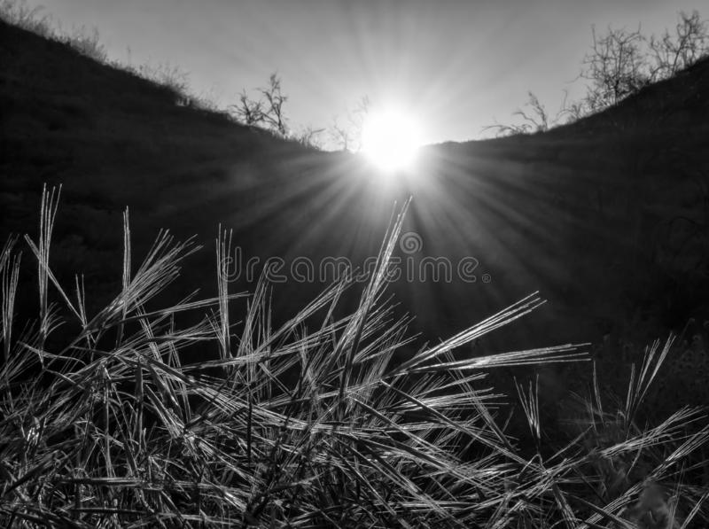 Sun Rays at Daybreak Shine on Grasses in Black and White Glow. Sun rays shine on grasses in conceptual black and white daybreak image stock photos