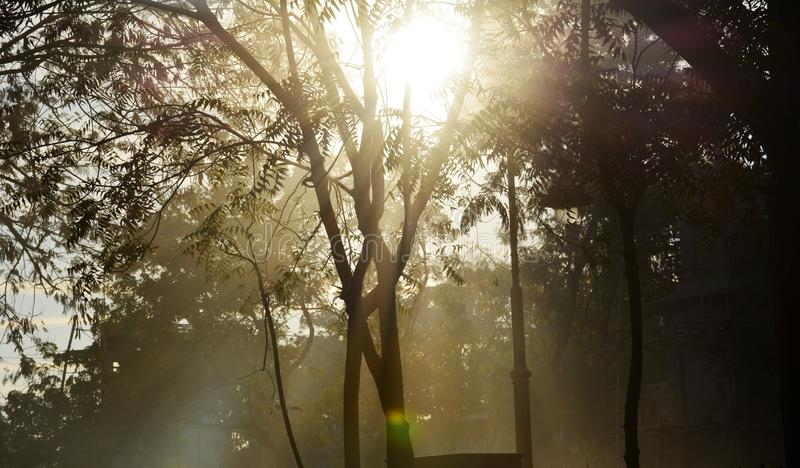 Sun rays filtering through the trees stock images