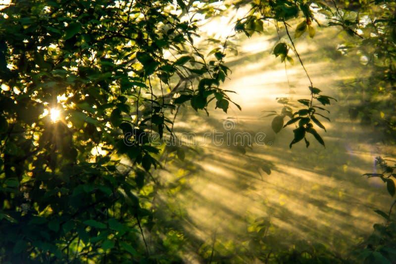 Sun rays foliage stock photography