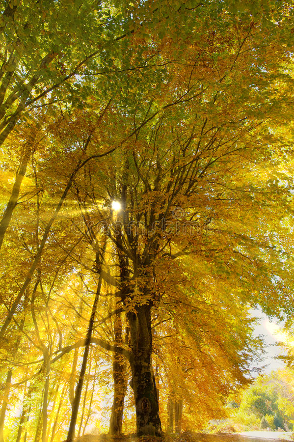 Download Sun rays in the forest stock photo. Image of picturesque - 23958142