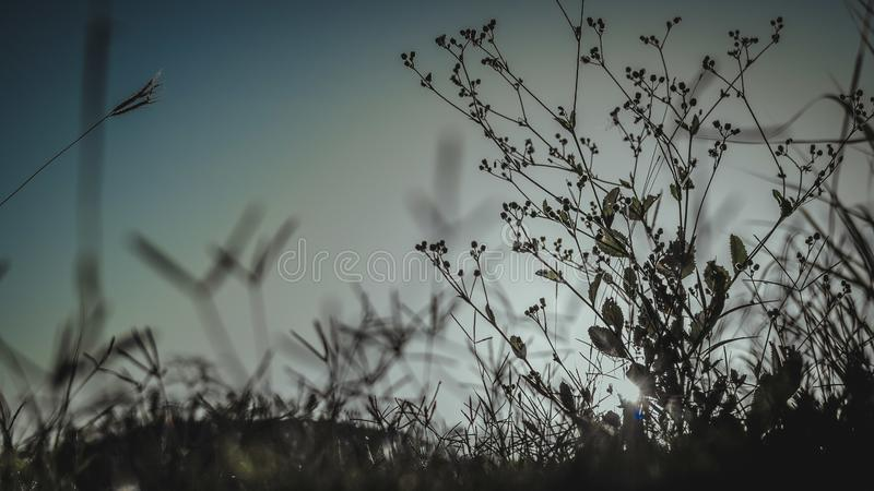 sun rays and grass stock photography