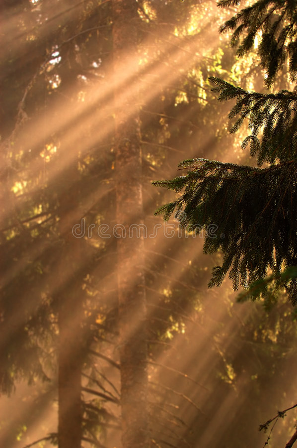 Free Sun Rays In The Woods Royalty Free Stock Photos - 2030948