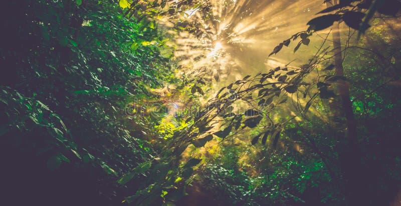 Nature background sun shine forest stock image