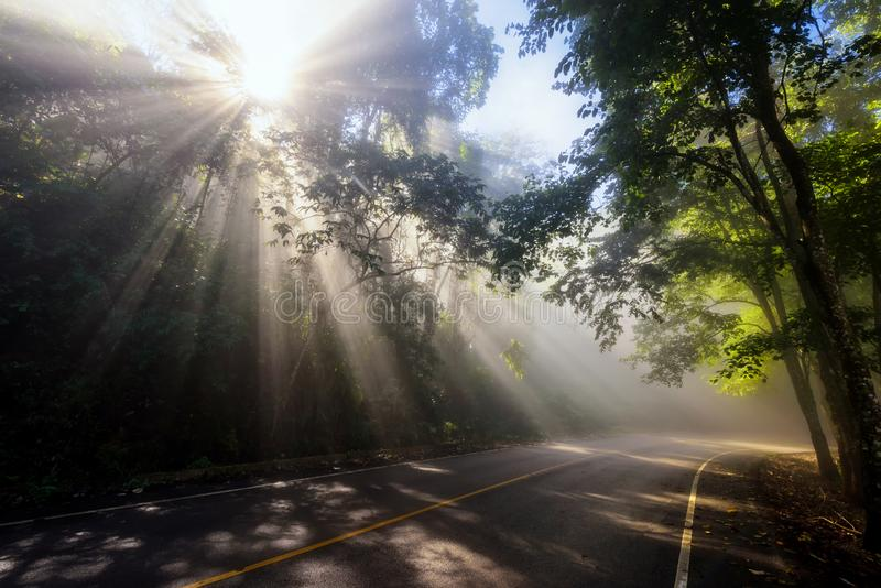sun rays through mist and forest on road royalty free stock photography