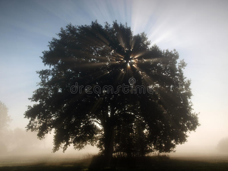 Sun rays in the misty morning landscape royalty free stock photos