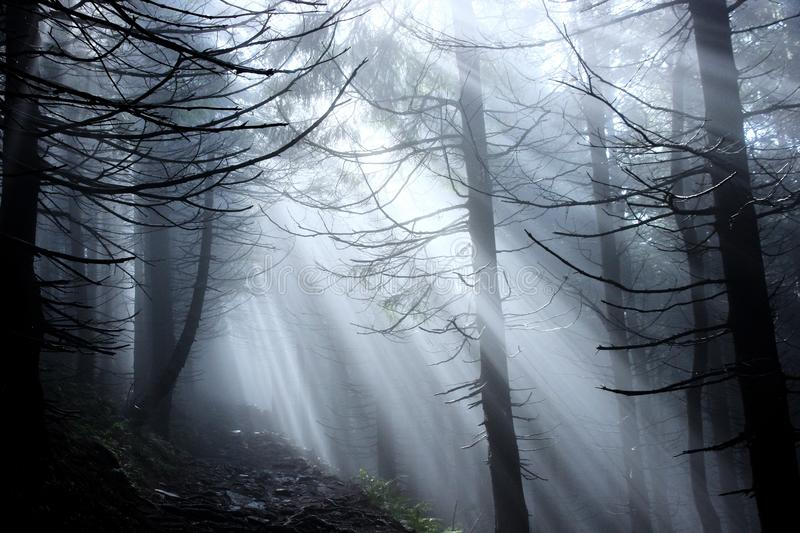 Sun rays in a mystery forest royalty free stock photography