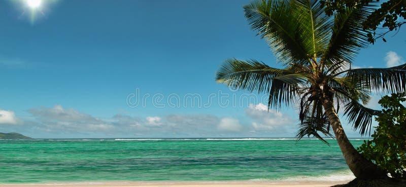 Sun rays of palm tree beach. Panorama