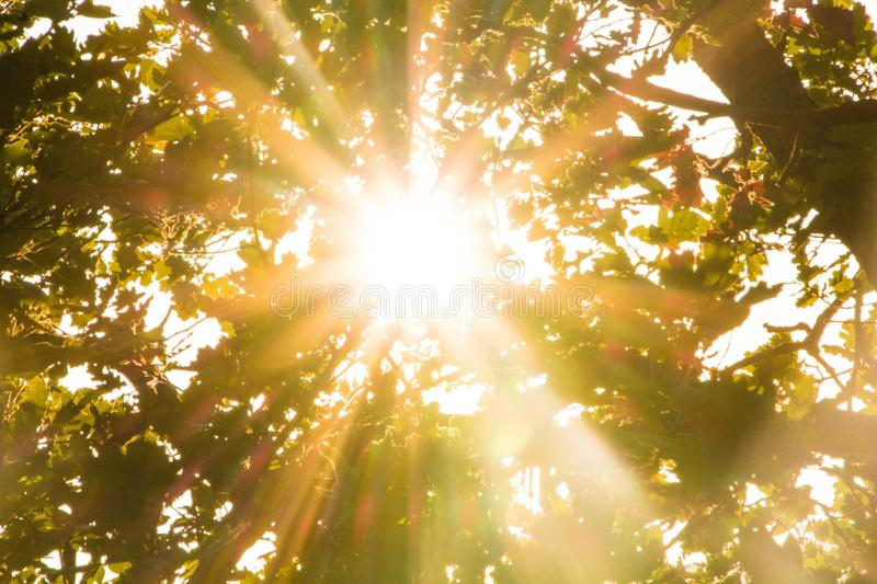 Sun rays pass through foliage trees. Beautiful nature wild landscape sunrise with trees. Lens flare and sun natural sunny. Background stock image