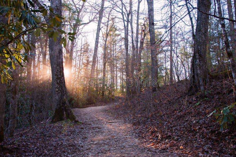 Sun rays peeking through trees in forest sunset stock photography