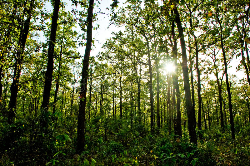 Sun rays shining in the forest stock images