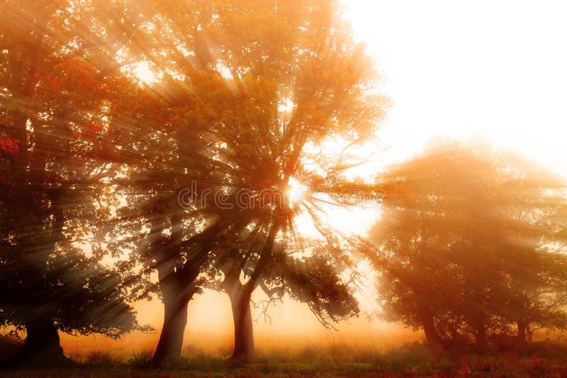 Sun rays shining through trees on a misty morning at sunrise stock images