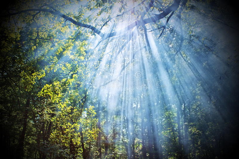 Sun rays shining through trees royalty free stock photo