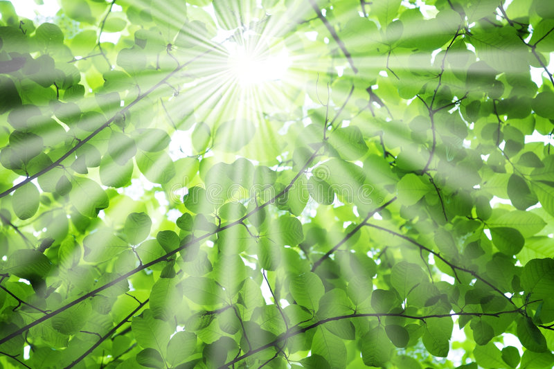 Download Sun Rays Through Tree Branches Royalty Free Stock Images - Image: 5668309