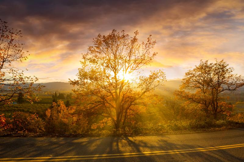 Sun Rays Through Trees During Sunset in Oregon. Sun rays through trees along the countryside road on a fall day during evening sunset in Hood River Oregon stock image