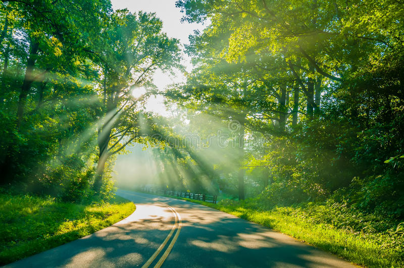Sun rays through trees on road stock photography
