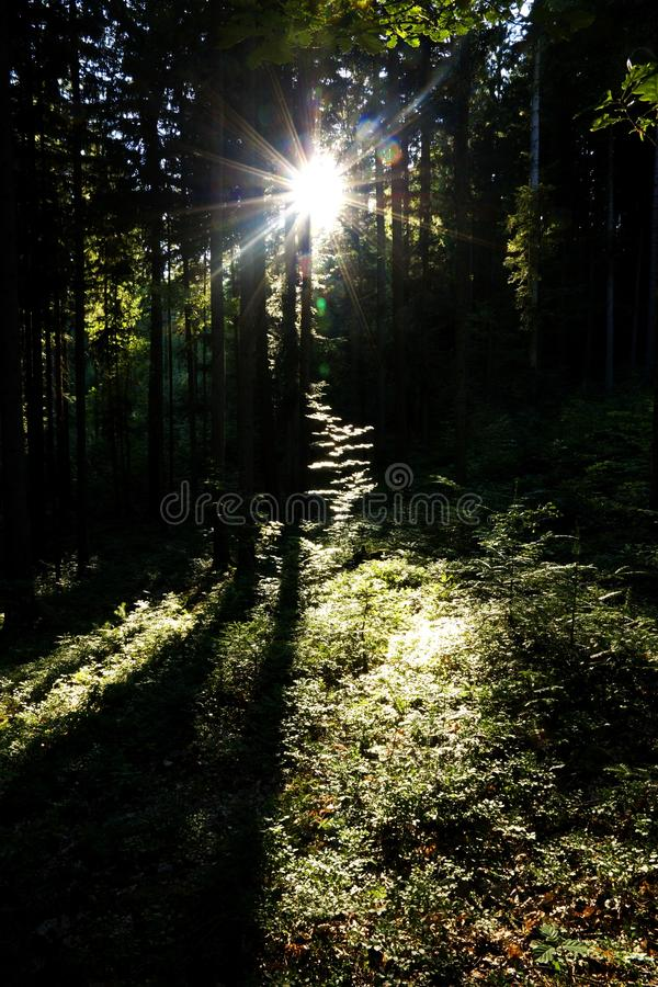 Sun rays through trees stock image