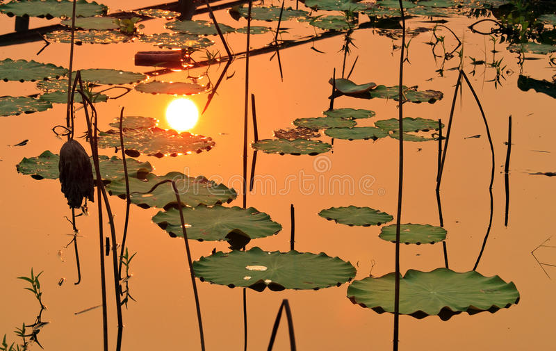 Download The sun reflect on lake stock photo. Image of leaf, country - 30793136