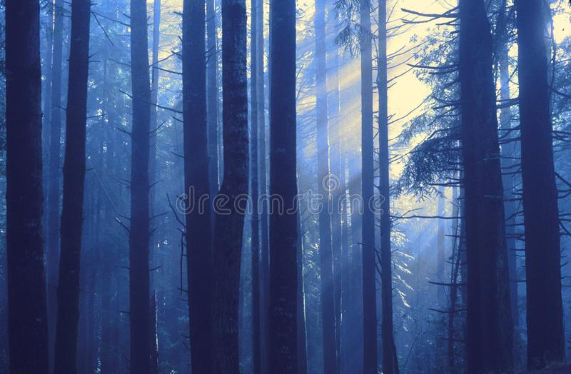 Sun Rise Behind Tree stock photos