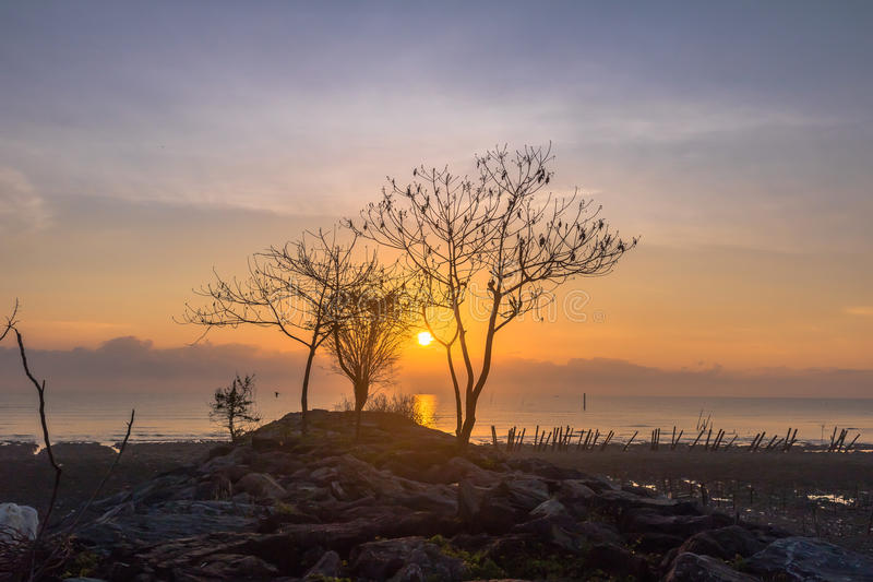 Sun rise obove the Trees on the rock near the dock. Smoke from burning forest from Indonesia. make the light of the sun can fade the sun is red round before royalty free stock photo