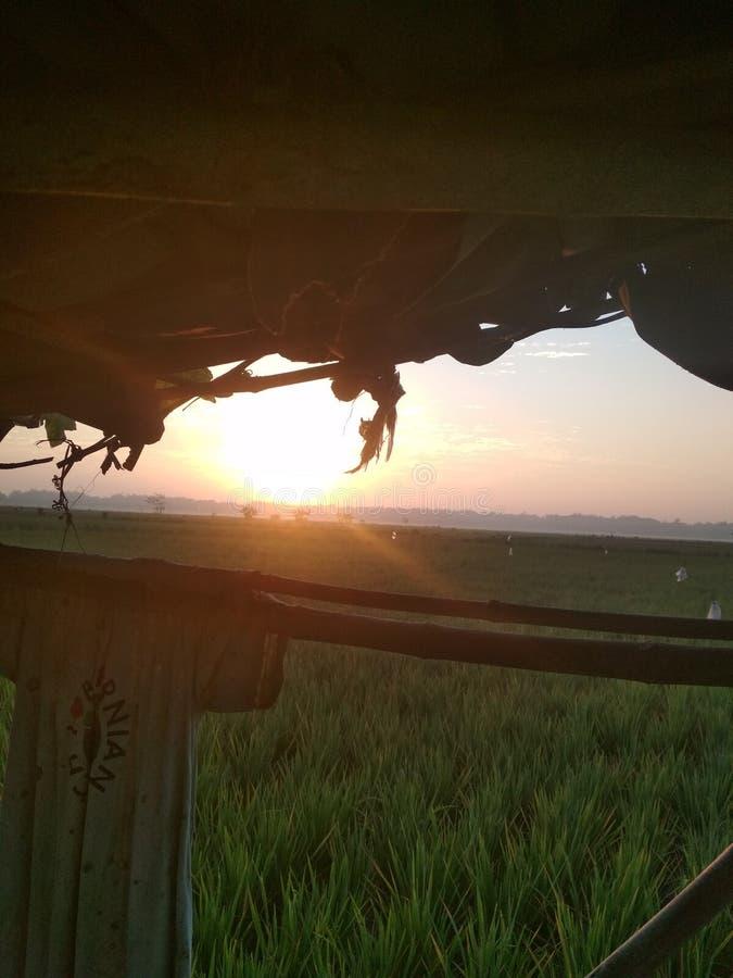 Sun rise in paddy rice field. Indonesian, bali, ubud stock image