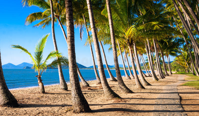 Sun rise at tropical beach. Sun rise at a beautiful tropical beach with palm trees stock image