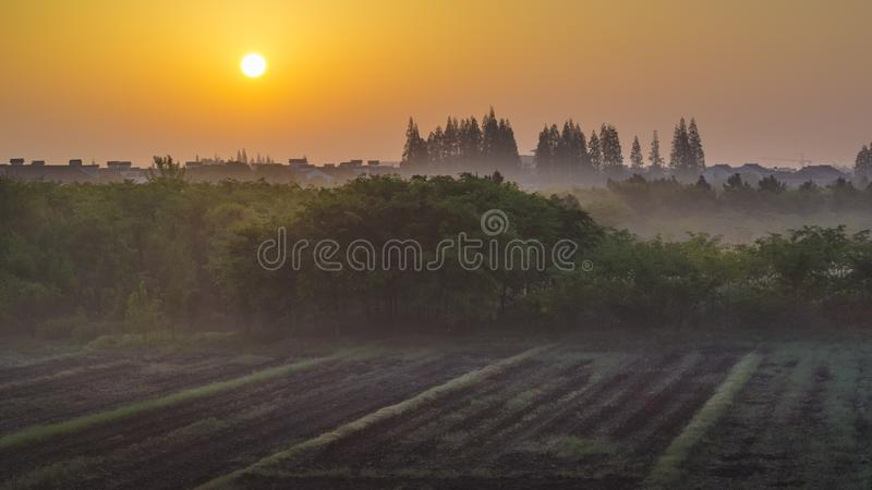 Early morning sunrise on the field. The sun rises, the fog begins, and a new day begins stock photography