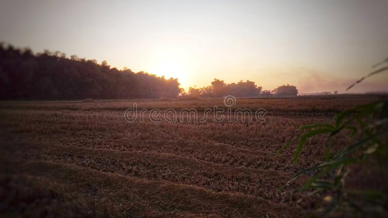 The sun rises in harvested rice fields stock images