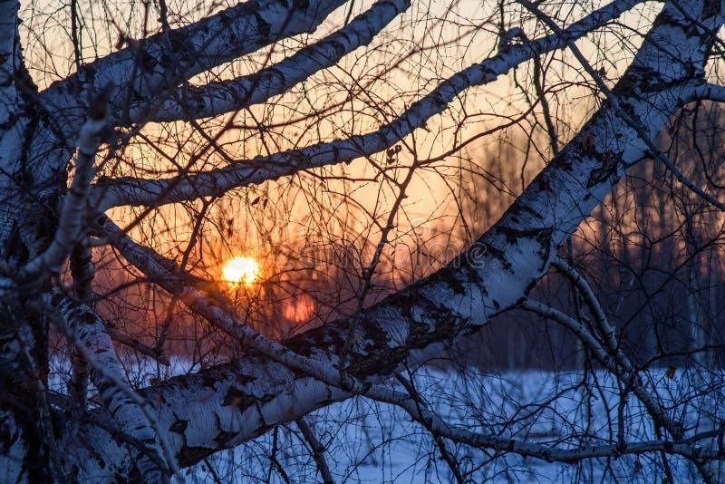 Sunrise on a background of trees. stock image
