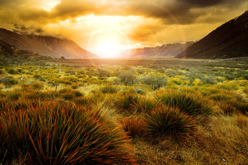 sun rising behind grass field in open country of new zealand sce stock image