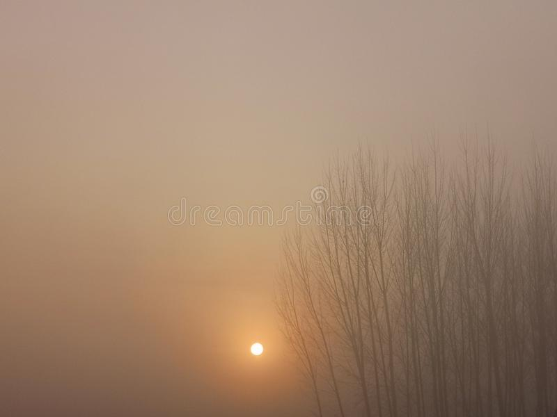 The sun is rising from the fog beside the forest. The fog is heavy.The sun is rising from the east.the forest is not clear royalty free stock photos