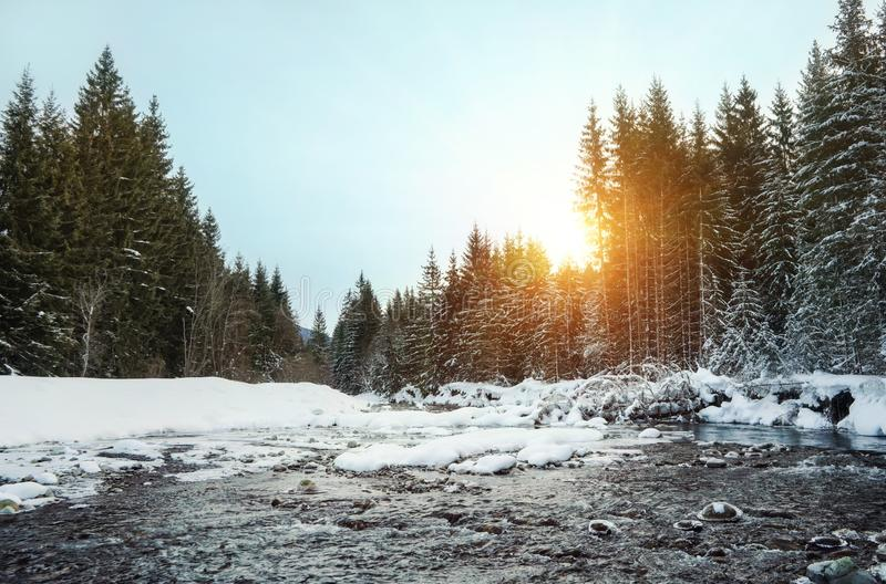 Sun rising in morning over trees near winter river, parts covered with ice and snow royalty free stock images