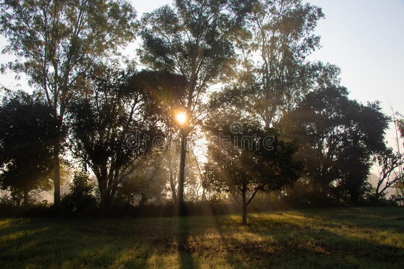 Sun rising rays through the trees in fog and mist morning royalty free stock photos