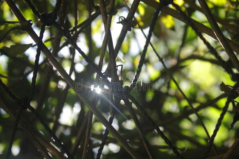 The Sun rzut winogrona fotografia stock