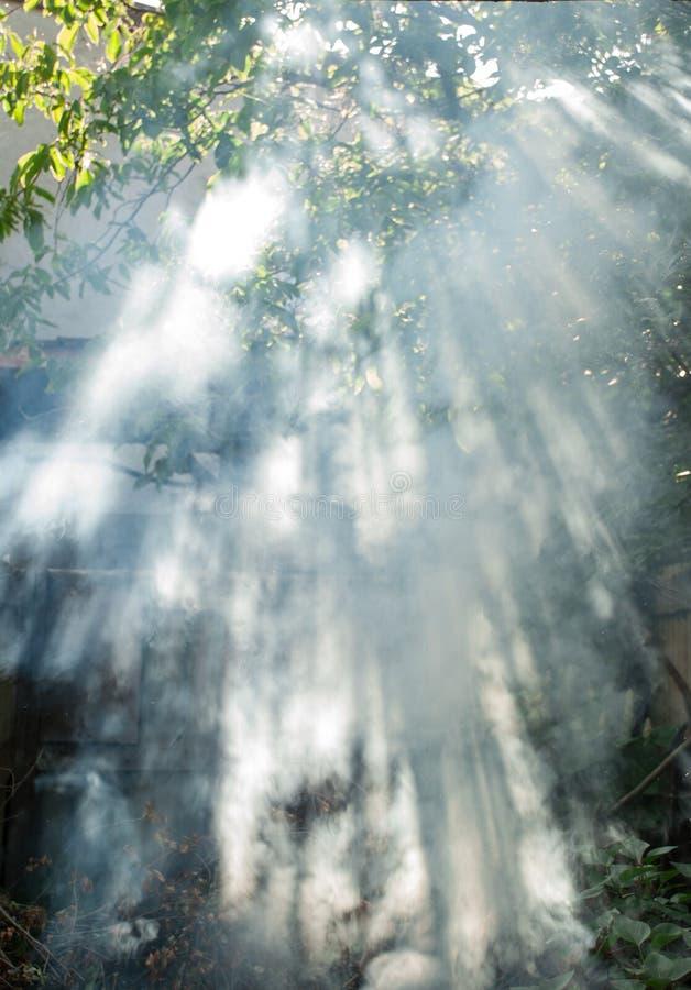 Sun& x27; s光芒通过叶子和烟击穿 免版税库存图片