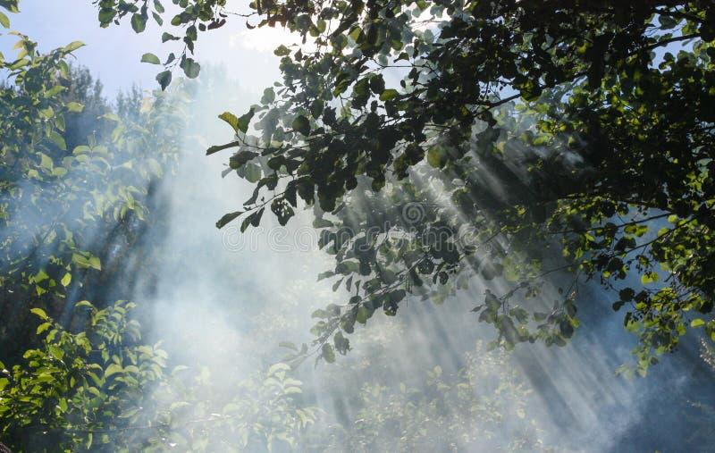 Sun& x27; s光芒通过叶子和烟击穿 免版税库存照片
