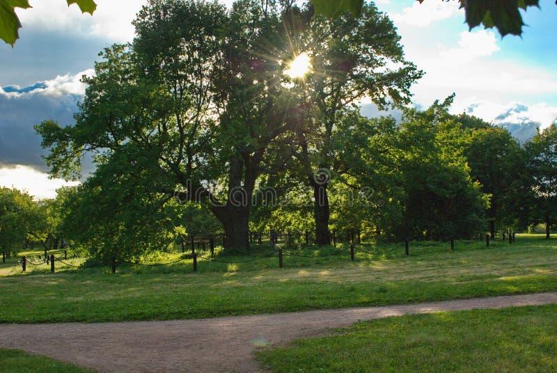 Sun' s de stralen maken hun manier door het dikke gebladerte van een reusachtige boom royalty-vrije stock afbeelding