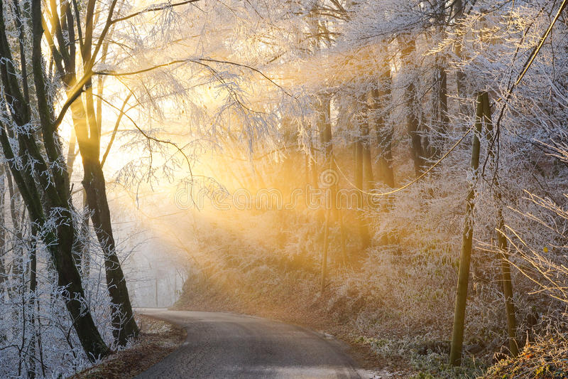 The sun's rays pass through the fog in winter stock photos