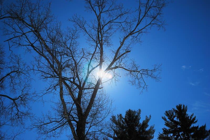 Sun scrute cependant les branches d'un chêne un après-midi en retard d'hivers images stock