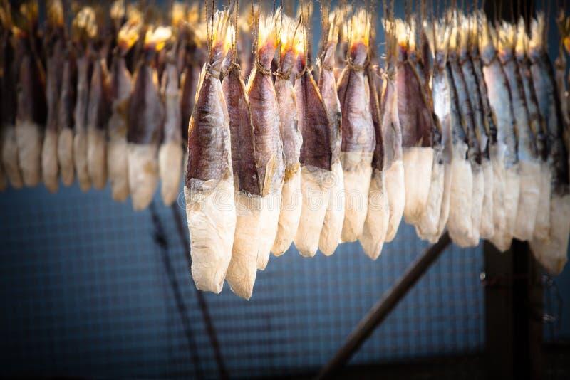 Sun secou peixes salgados imagens de stock royalty free